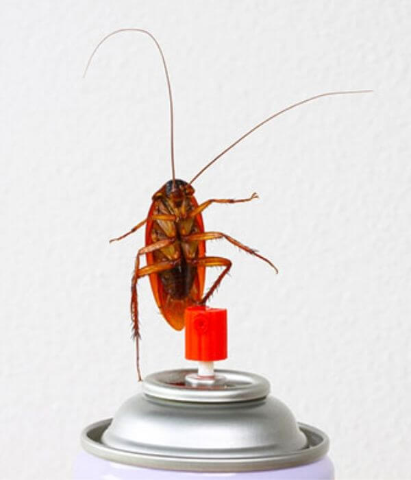 Method to Treat Pesky Roaches