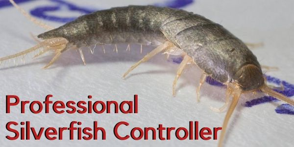 Professional Silverfish Controller
