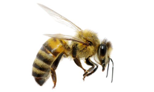 The Destruction Caused by Bees