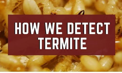 how we detect termite