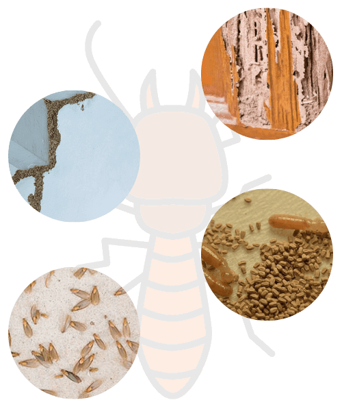 signs of termite