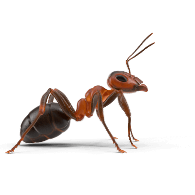 what are ants
