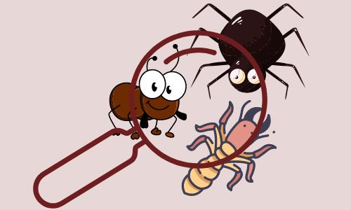 pest inspection
